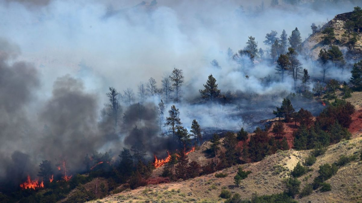 Wildfires in Colorado Displace Thousands: Instant Closure of National Forest
