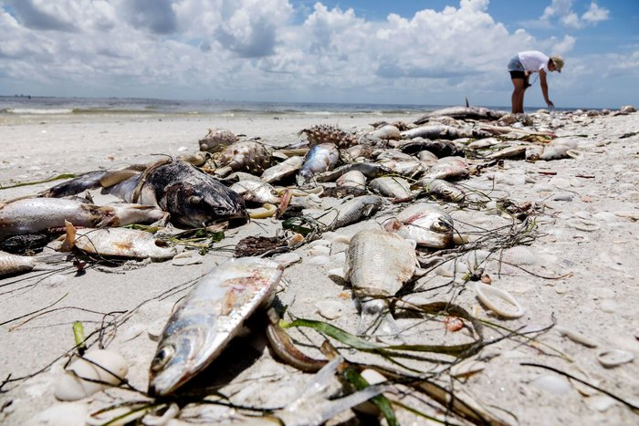 A Toxic 'Red Tide' is Killing Florida Wildlife