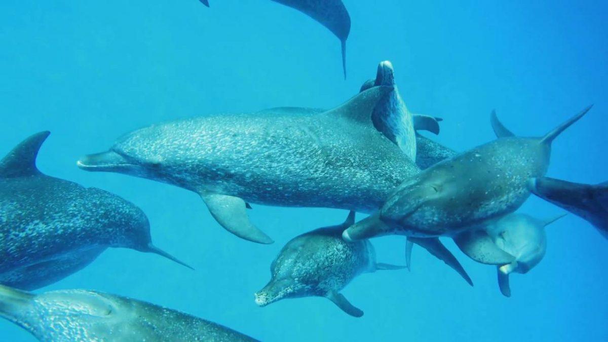 Healthy Ocean – Healthy People