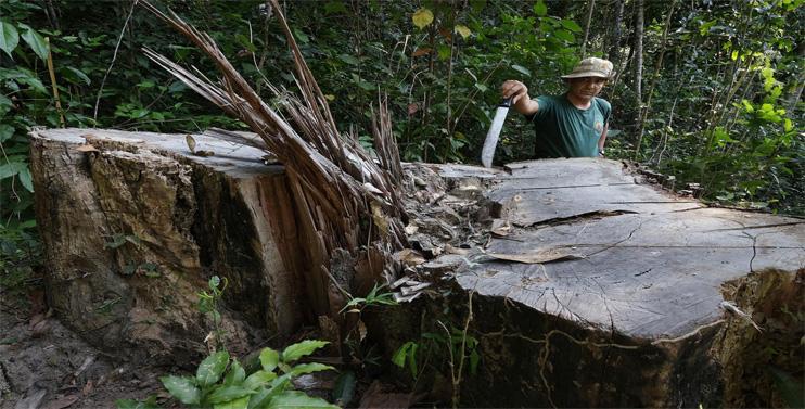 Deforestation and Indigenous Life