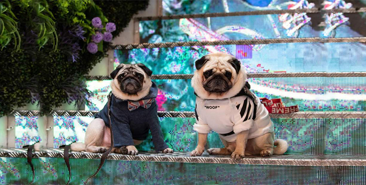 London Dog Week 2019