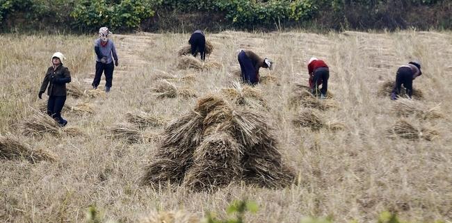 Drought Causes  Food Crisis on North Korea