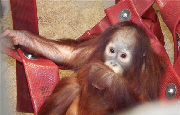 Monkey World welcomes four endangered new arrivals