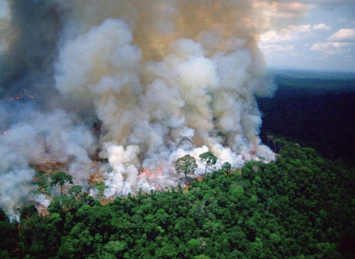 World reacts to ongoing Amazon wildfires