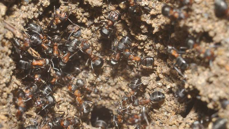 Cannibal ants discovered in a nuclear bunker in Poland