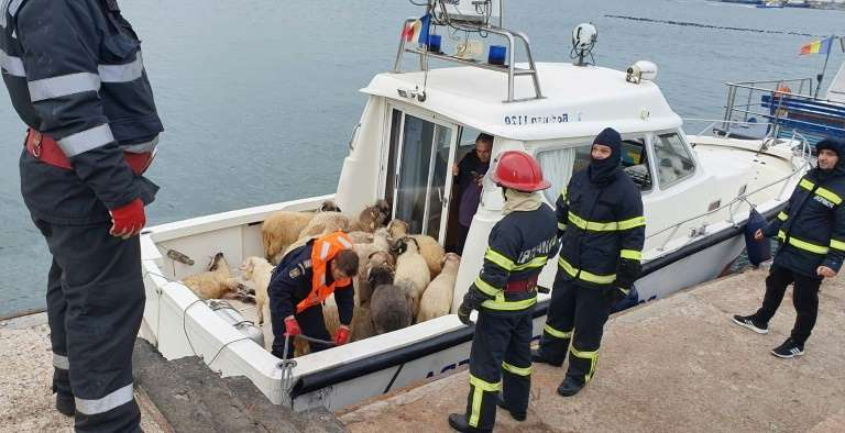 Ship Capsizes off in Romania with 14000 Sheep: Rescuers Struggling