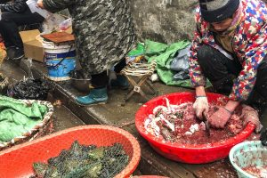 Animals and Seafoods are key ingredient of coronavirus outbreak
