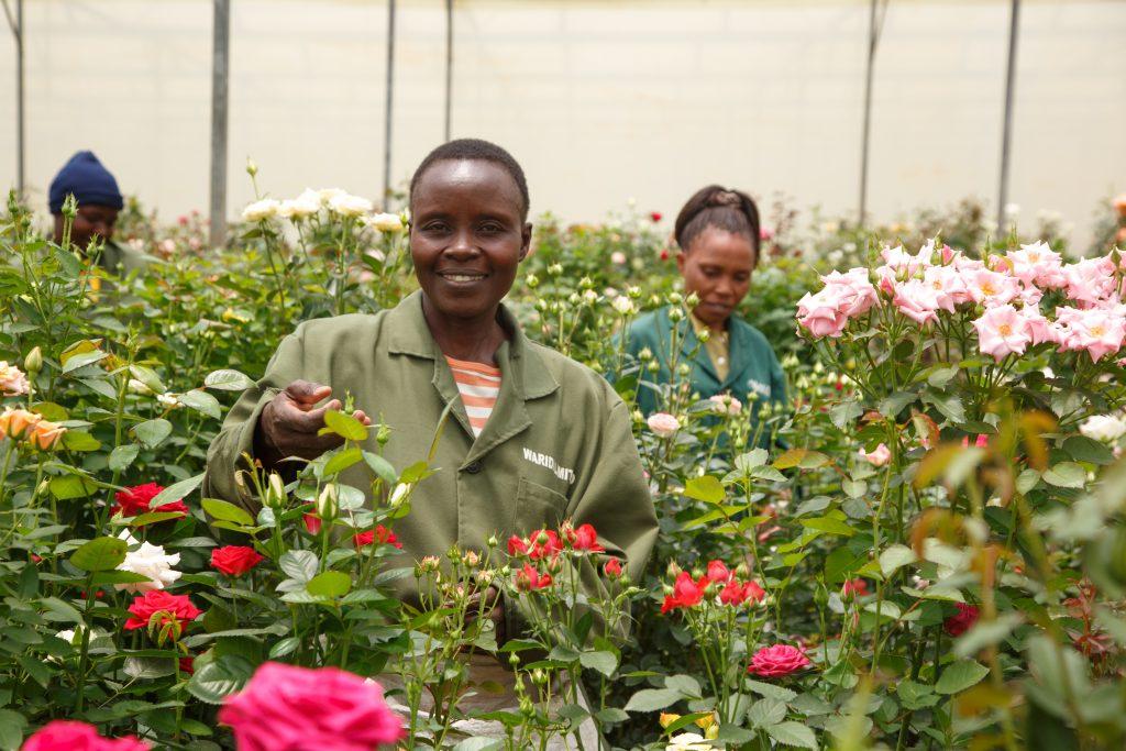 Flower farm workers in Kenya
